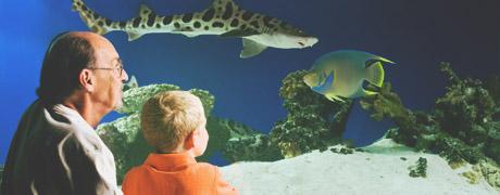 Sea Life Aquarium - Mall of America